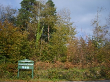Photo Gallery Image - Abbeyford Woods