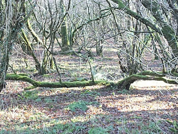 Photo Gallery Image - Meldon Woods