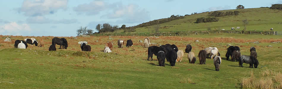 dating okehampton Dartmoor is an area of moorland in there is a tradition of military usage of dartmoor dating back to a large british army training camp remains at okehampton.